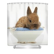 Rabbit In A China Bowl Shower Curtain