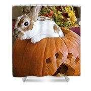 Rabbit Joins The Harvest Shower Curtain by Alanna DPhoto