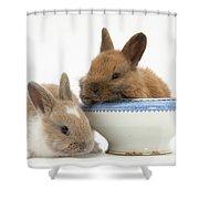 Rabbits And China Bowl Shower Curtain