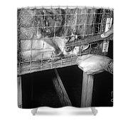Rabid Fox, 1958 Shower Curtain