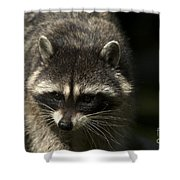 Raccoon 2 Shower Curtain