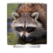 Raccoon Portrait Shower Curtain