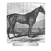 Racehorse, 1867 Shower Curtain