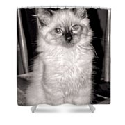 Ragdoll Shower Curtain