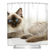 Ragdoll Kitten Shower Curtain