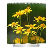 Ragwort Shower Curtain