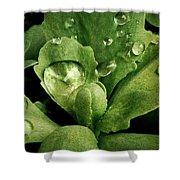Rain All Day Shower Curtain
