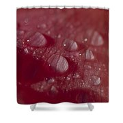 Rain Droplets Magnify The Surface Shower Curtain