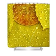 Rain Drops On Aspen Leaves In Autumn Shower Curtain