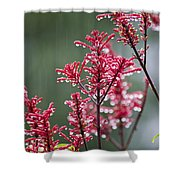 Rain Drops On Firespike  Shower Curtain