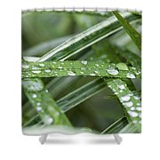 Rain Drops On Grasses Shower Curtain