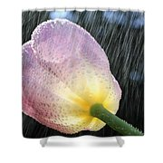 Rain Falling On A Tulip Shower Curtain