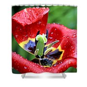 Rain Kissed Shower Curtain