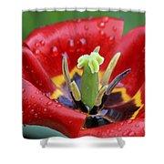 Rain Kissed Tulip 2 Shower Curtain