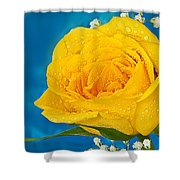 Rain On A Yellow Rose Shower Curtain