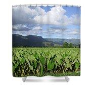 Rain Over A Hanalei Taro Field Shower Curtain