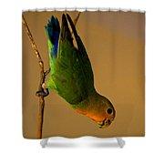 Rainbow Bird Shower Curtain