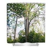 Rainbow Eucalyptus Shower Curtain