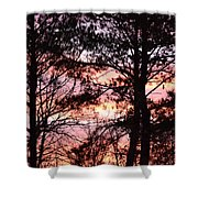 Rainbow Forest Shower Curtain