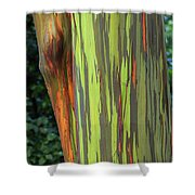 Rainbow Gum Tree Hawaii Shower Curtain