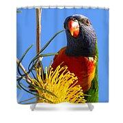 Rainbow Lorikeet Pose Shower Curtain