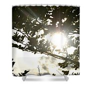Rainbow Rays Shower Curtain