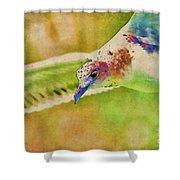 Rainbow Seagull Shower Curtain