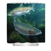 Rainbow Trout Oncorhynchus Mykiss Pair Shower Curtain