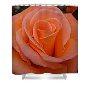 Raindrops On Roses Seven Shower Curtain