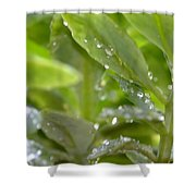 Raindrops On Sedum Shower Curtain