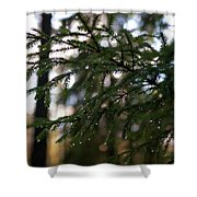 Raindrops On The Spruce Twig Shower Curtain