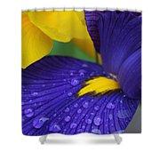 Raindrops Purple Dutch Iris Flower Shower Curtain