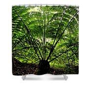 Rainforest Backlight Shower Curtain