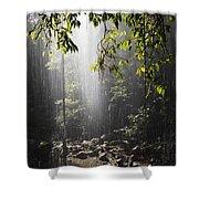 Rainforest, Bellingen, Australia Shower Curtain