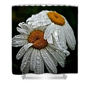 Rainy Day Daisies Shower Curtain