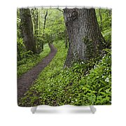 Ramsons By Path In Woods, County Louth Shower Curtain