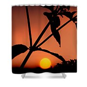 Raphael Sunset 1 Shower Curtain