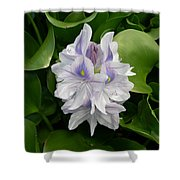 Rare Hawain Water Lilly Shower Curtain by Claude McCoy
