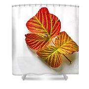 Raspberry Leaves In Autumn Shower Curtain