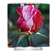 Raspberry Swirl Rose Shower Curtain