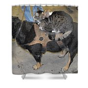 Rat Cat Dog Shower Curtain