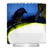 Raven Reflecting  Shower Curtain by Colette V Hera  Guggenheim