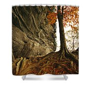 Raven Rock And Autumn Colored Beech Shower Curtain