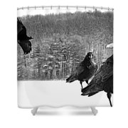 Ravens By A Woods Shower Curtain