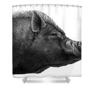 Razorback Shower Curtain