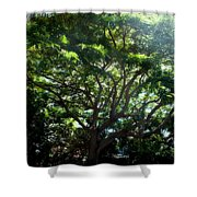 Reach High And Wide Shower Curtain