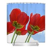 Reaching Shower Curtain