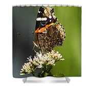 Red Admiral Butterfly Shower Curtain