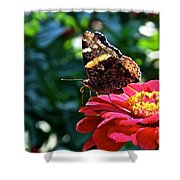 Red Admiral Probocis Shower Curtain