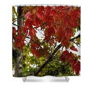 Red And Green Prior X-mas Shower Curtain